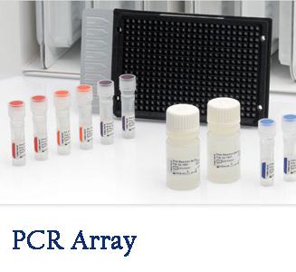 PCR Array