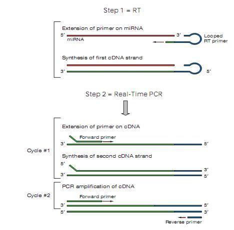 http://www.biotnt.com/incs/file/fckeditor/microRNA18(2).JPG